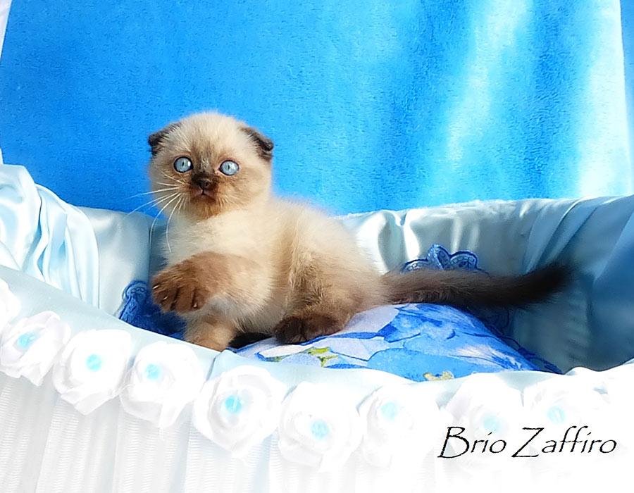 Фото котенка Kristoffer Московского питомника кошек