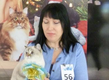 Международная выставка кошек Москва ЦВЕТОК САКУРЫ
