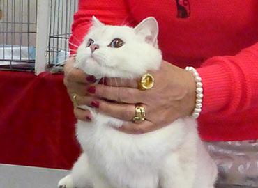 Международная выставка кошек МоскваВесенний Кэт-Салон
