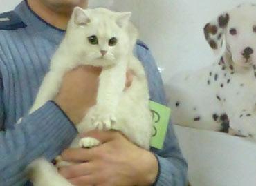 Международная выставка кошек Москва Зимний Кэт-Салон