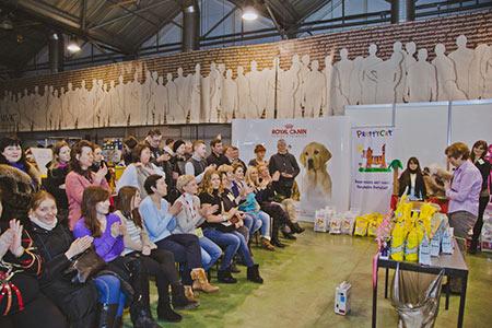 Кошки британские шиншиллы Московского питомника BRIO ZAFFIRO участвуют в Международных выставках